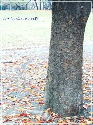 other_N511.jpg